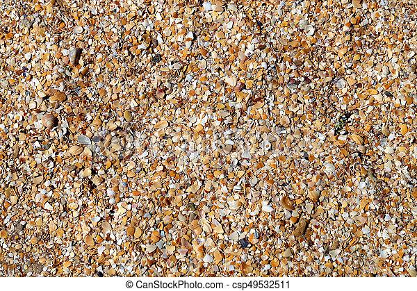 Photo shell texture on the beach - csp49532511