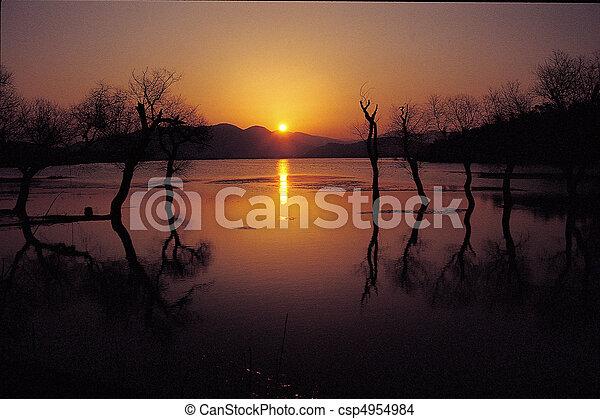 natureza, vista - csp4954984