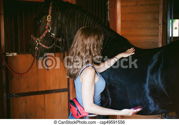 woman horseman cleans from dirt with brush Friesian horse in stables on farm, taking care of purebred pets