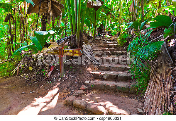 Pathway in jungle, Vallee de Mai, Seychelles - csp4966831