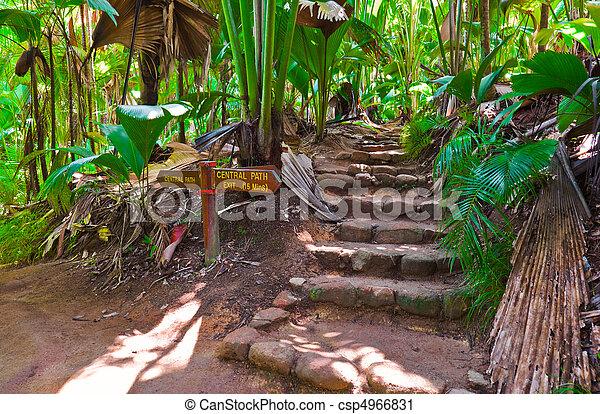 Pathway in jungle, Vallee de Mai, Seychelles - csp4966831