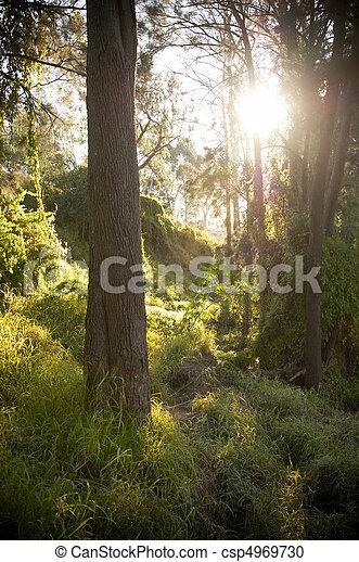 Fantasy Forest - csp4969730