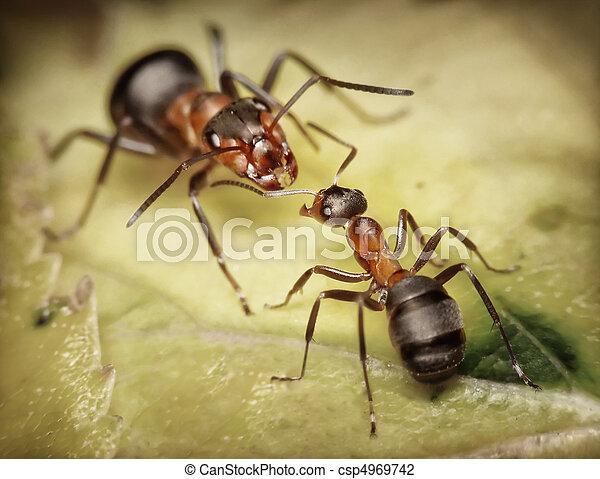soldado, trabajador, hormigas, peligro - csp4969742