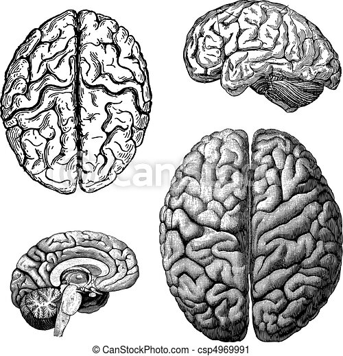 Vector Brains - csp4969991