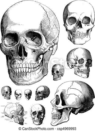Vector Skulls - csp4969993