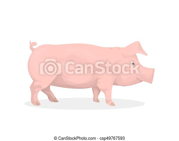 Isolated pig illustration. - csp49767593
