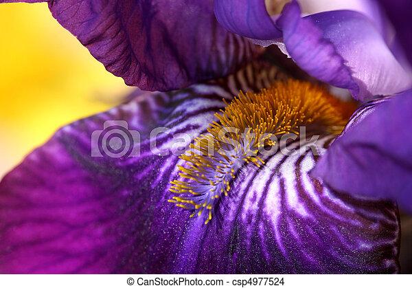 Iris flower - csp4977524