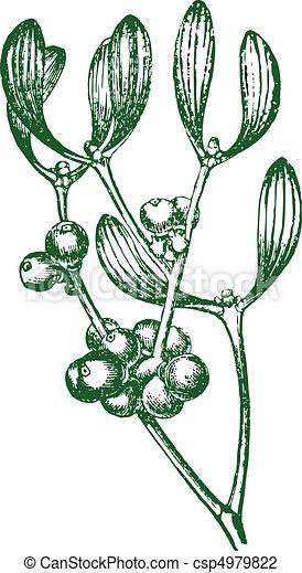 Vector Mistletoe - csp4979822