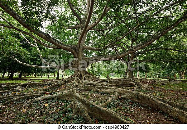 Tree roots - csp4980427