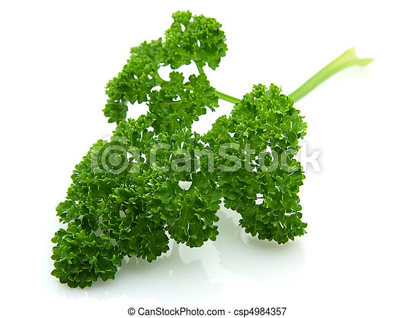 Parsley branch - csp4984357