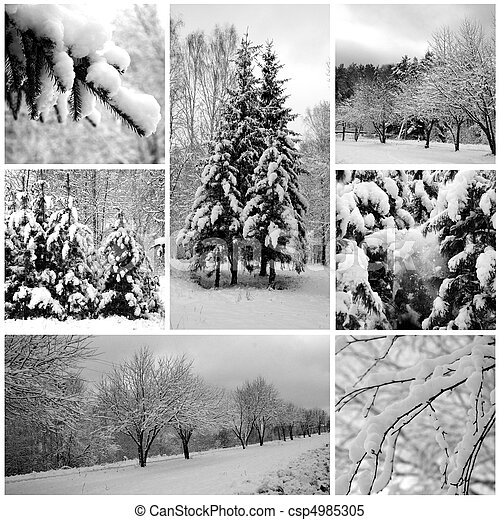 Winter forest beautiful, pines - csp4985305
