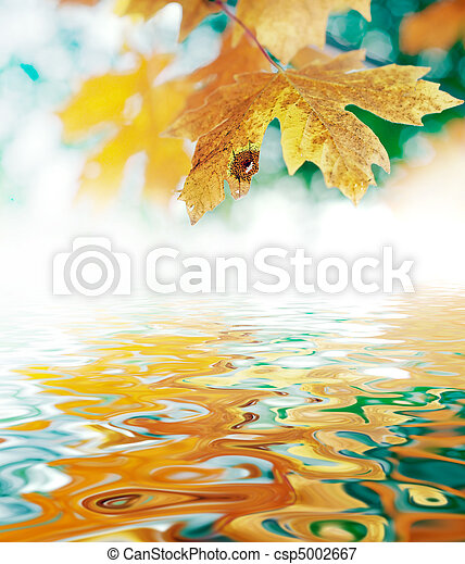 October Autumn Maple Leaf - csp5002667