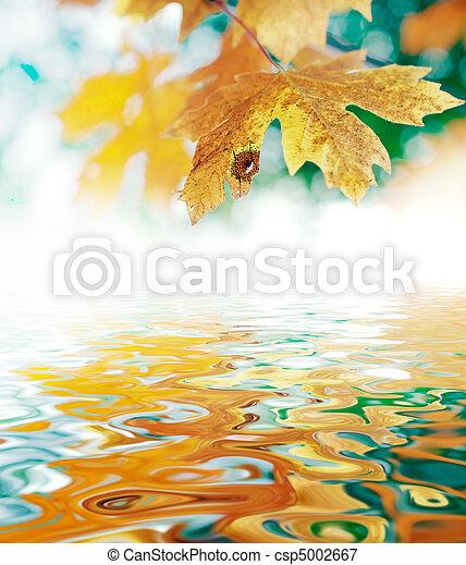 October Autumn Maple Leaf - csp5002667
