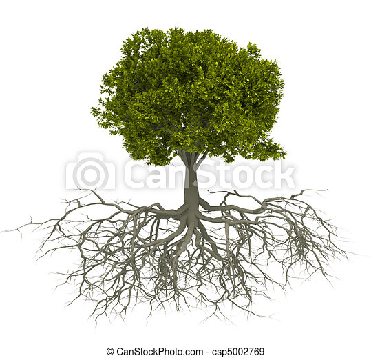 Tree and root - csp5002769