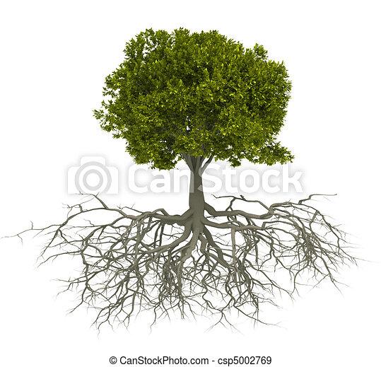 樹, 根 - csp5002769