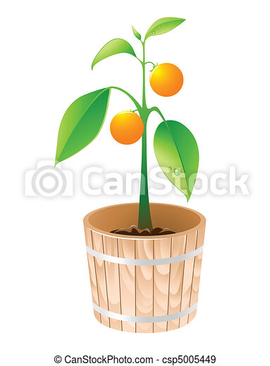 EPS Vectors of orange tree in a wooden tub isolated on a white ...