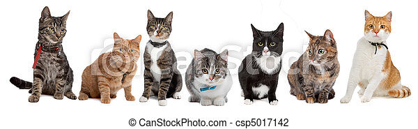 katter, grupp - csp5017142