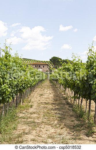 Wineyard - csp5018532