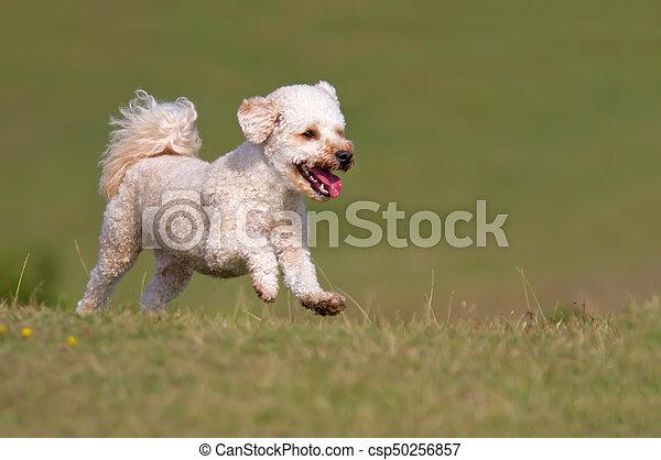 Dog running up a grassy hill - csp50256857