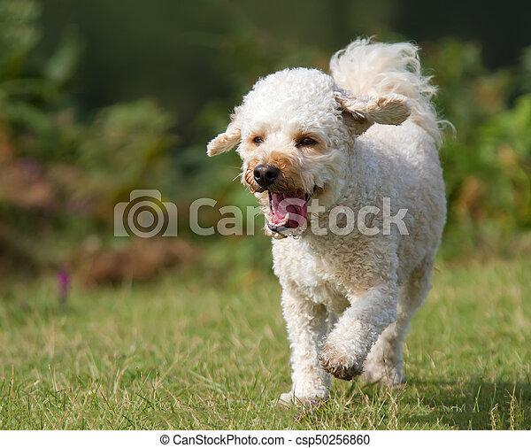 Dog walking on grass - csp50256860