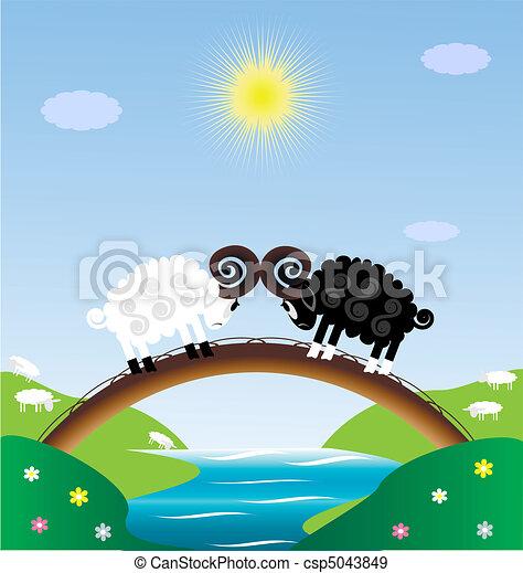 two sheep - csp5043849