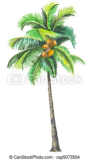 palm tree with coconuts drawing - photo #37