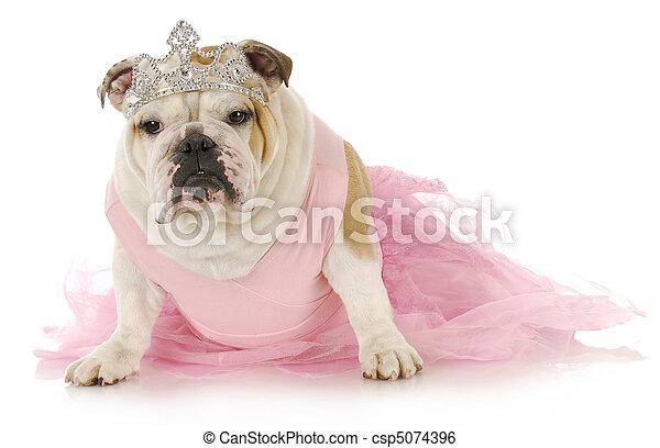 spoiled dog - csp5074396