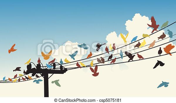 Bird roost - csp5075181