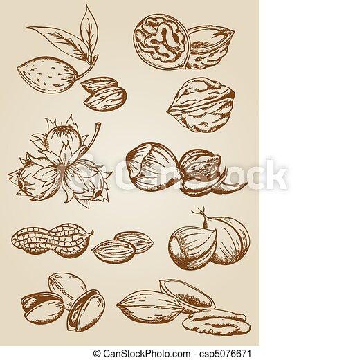 set of various nuts - csp5076671