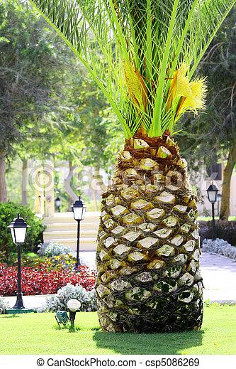 Archivi fotografici di palma albero come grande ananas for Albero di ananas