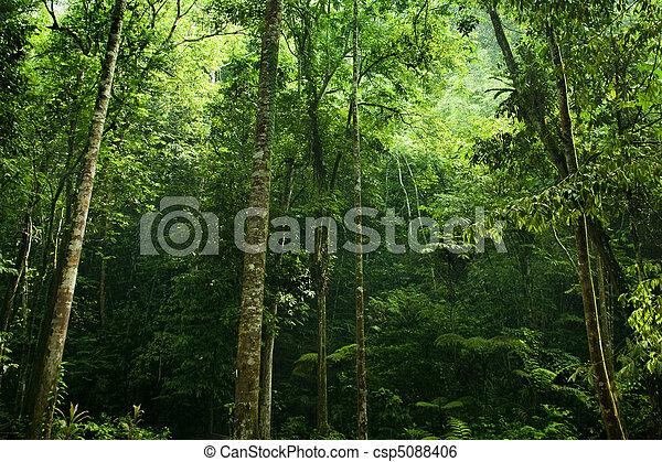 Forest sunlight - csp5088406