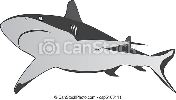 Shark, dangerous sea predator, vector - csp5100111