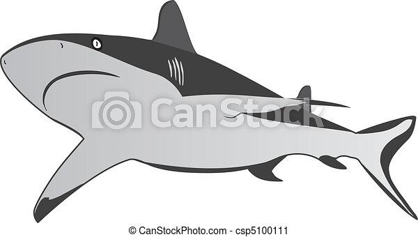 Shark, dangerous sea predator, vector - csp5100111