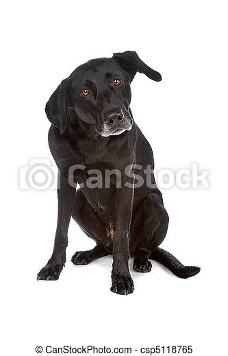 Mixed breed dog - csp5118765