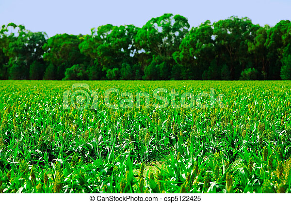 Crops - csp5122425