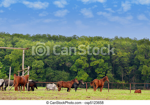 farm scene with horses - csp5123658