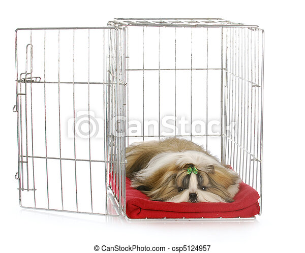 puppy in a crate - csp5124957