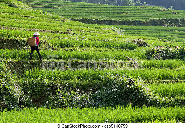 Vietnam Rice Paddy Farmer - csp5140753