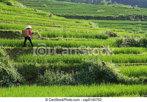 Vietnam Rice Paddy Farmer - csp5140753