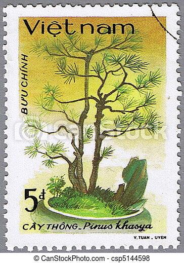 Pinus khasya - csp5144598