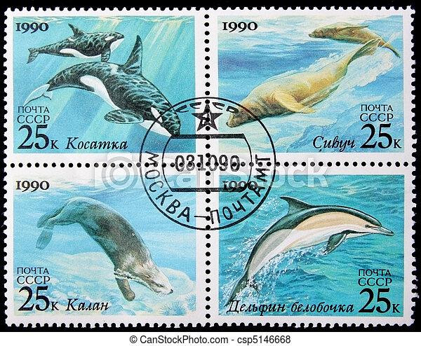 sea mammals - csp5146668