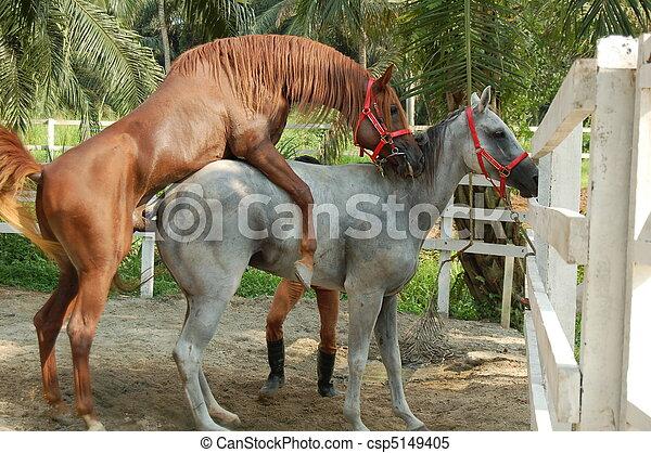 Horse Mating - csp5149405