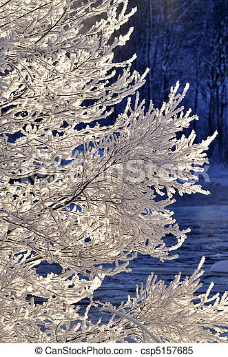 Snowy branch background - csp5157685