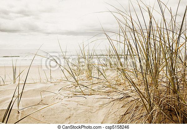 Close up of a tall grass on a beach during cloudy season - csp5158246