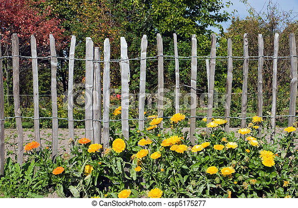 Flowers in front of a fence - csp5175277