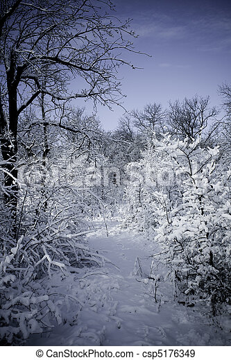 Winter forest in snow - csp5176349