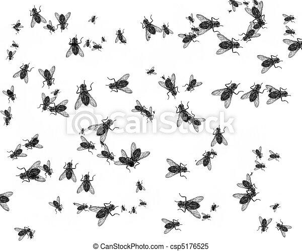 Dead flies - csp5176525