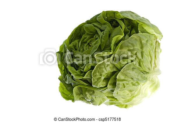 Butterhead Lettuce Isolated - csp5177518