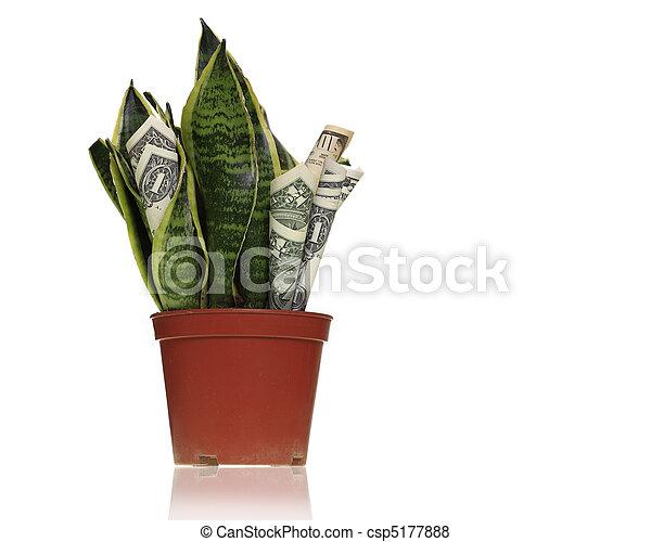 Money maker plant - csp5177888