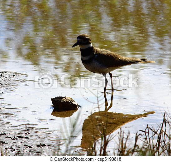 Migrating Bird - csp5193818